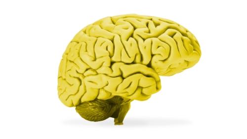 Brain .jpg