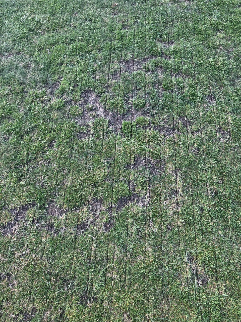 Above you can see the slit grooves made by the double disc seeder.
