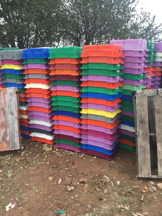 Blueberry Modern . For a number of yearsI have been intrigued by the riotous colours of the thousands of Blueberry boxes found throughout the Maritimes. In August when blueberry harvesting starts they are distributed in piles around the landscape of rural New Brunswick and Nova Scotia.  I hope to use these blueberry boxes strong formal properties to create large architectural installations in isolated areas. These installations will hopefully give new meaning and import to these arresting  quotidian agricultural objects.