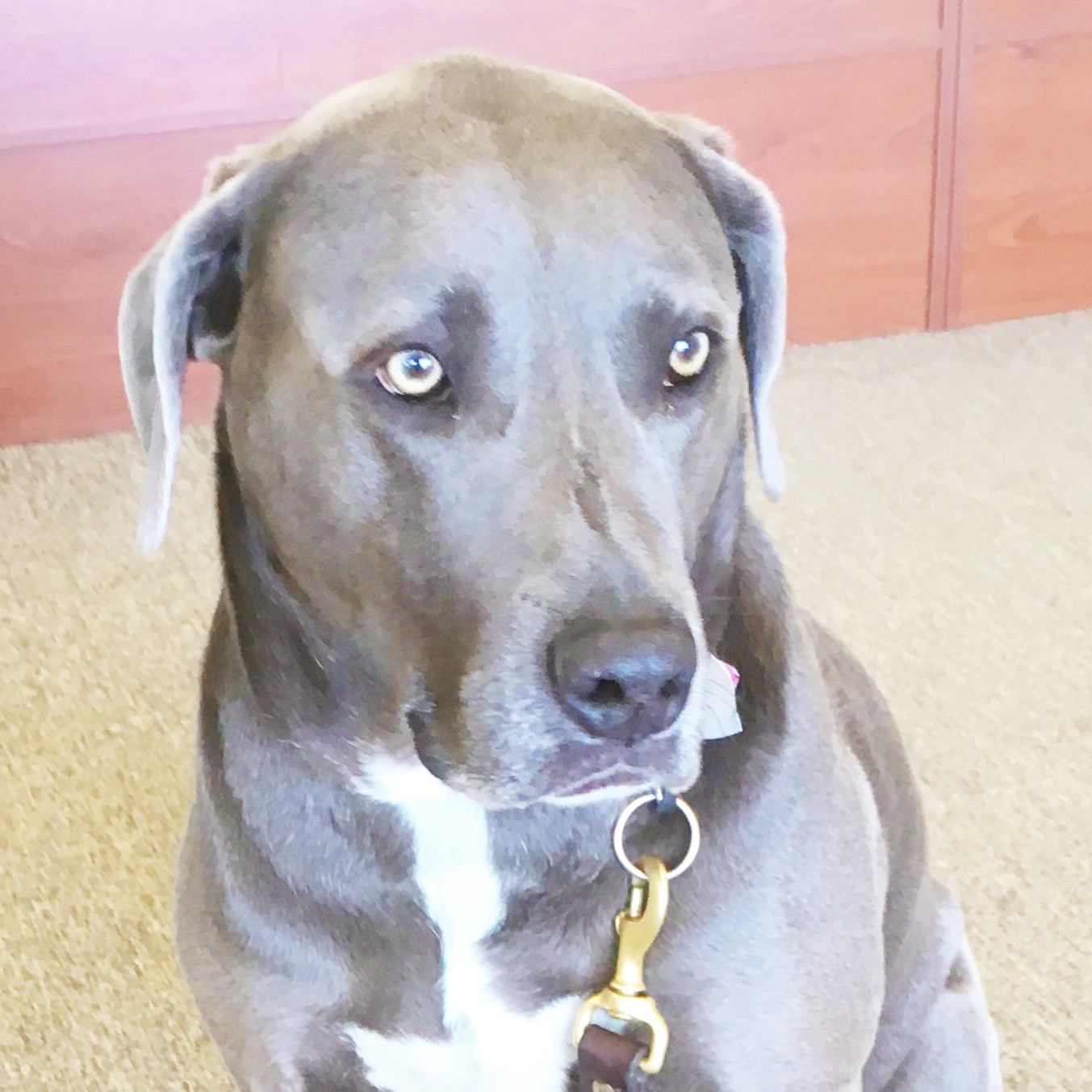 Vito, top dog - Just an all around good guy. Stop in to say hi to Vito - he'll be glad to see you!