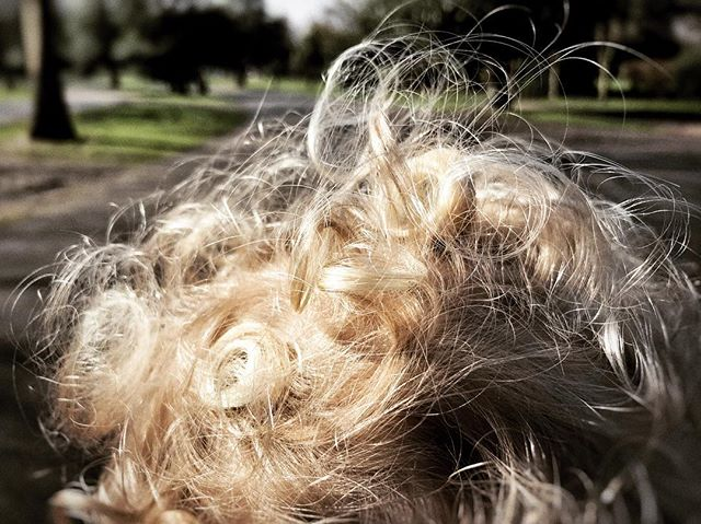 The best view in the world #PRAMOV #walkingwithkids #toddlerlife #iphoneonly #hairstyles #goldylocks