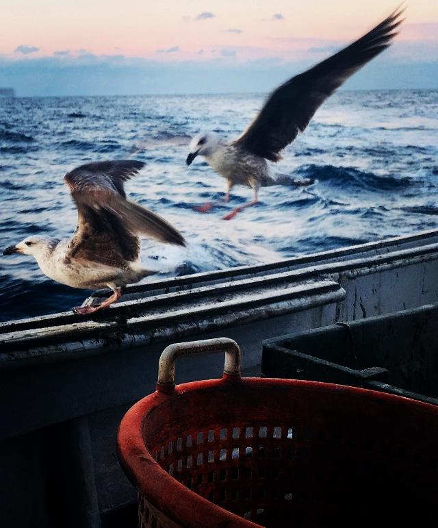 Sunrise and Sea Birds