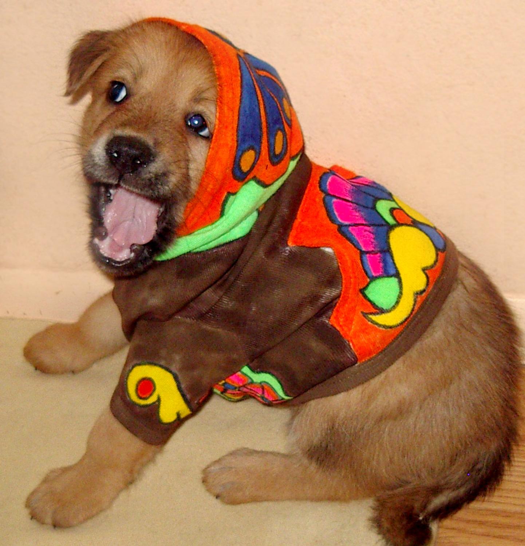 TJ-puppy-hoodie2.jpg