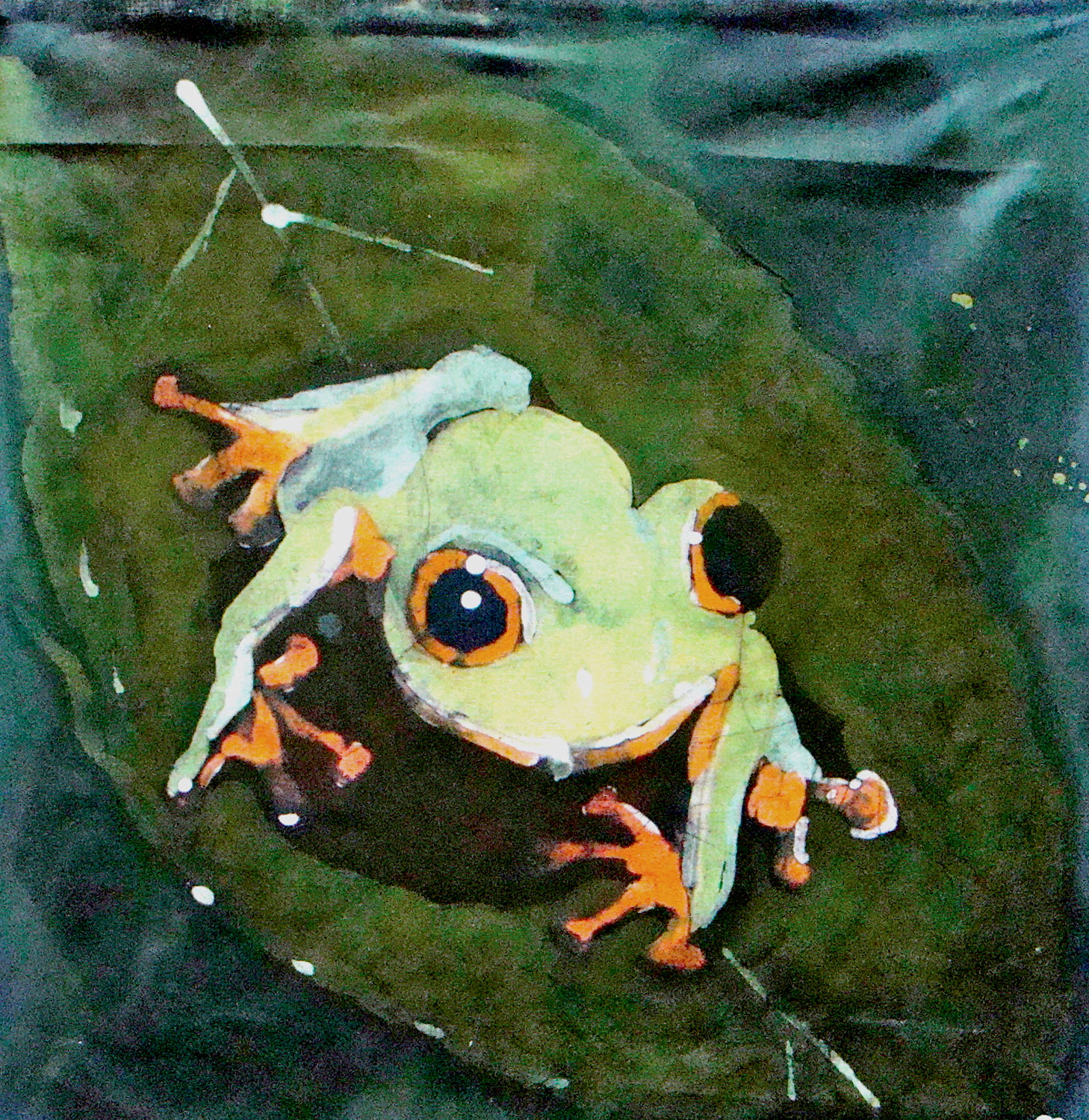 """Green Tree Frog"""