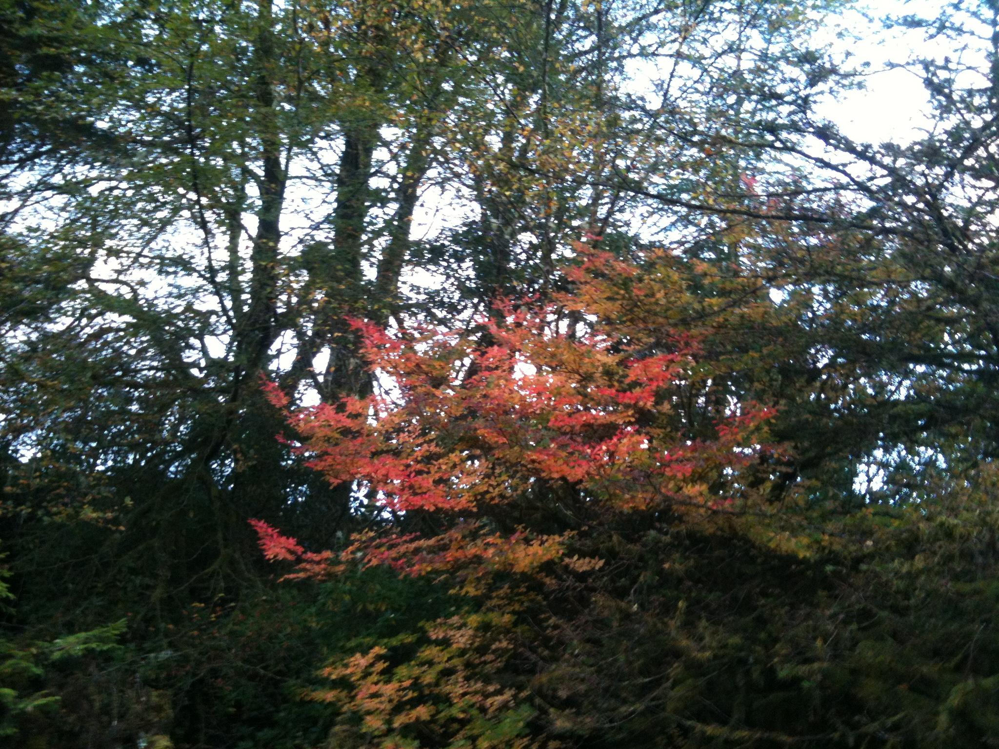 Autumn colours 2018
