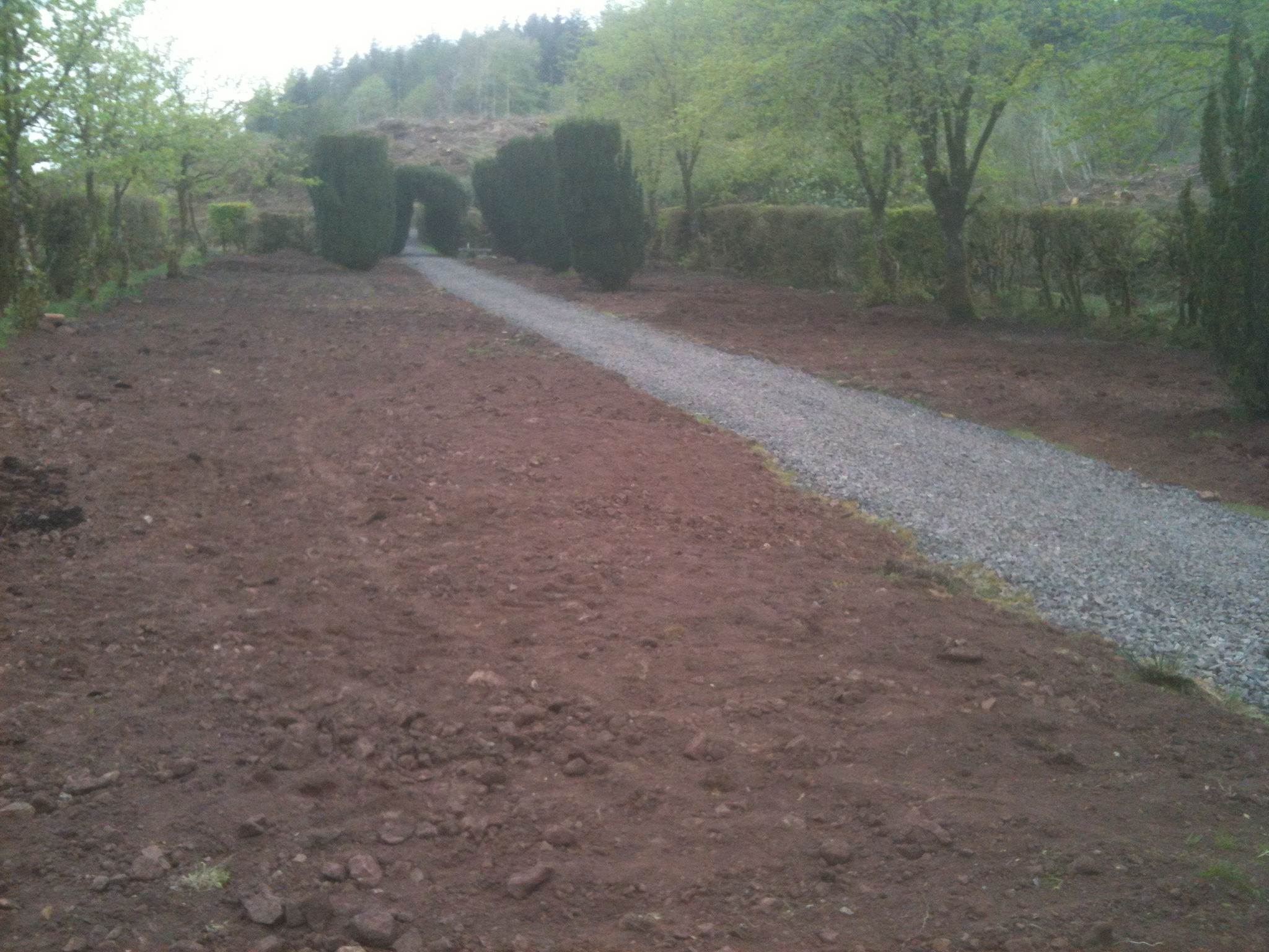 Nave with dead trees removed and ground ready for planting