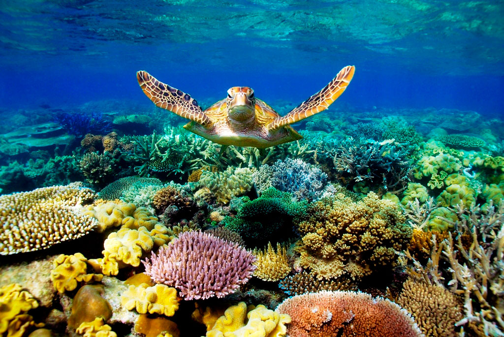 One-of-the-top-Cairns-Great-Barrier-Reef-dive-sites-Source-bendigowritersfestival.com_.au_.jpg