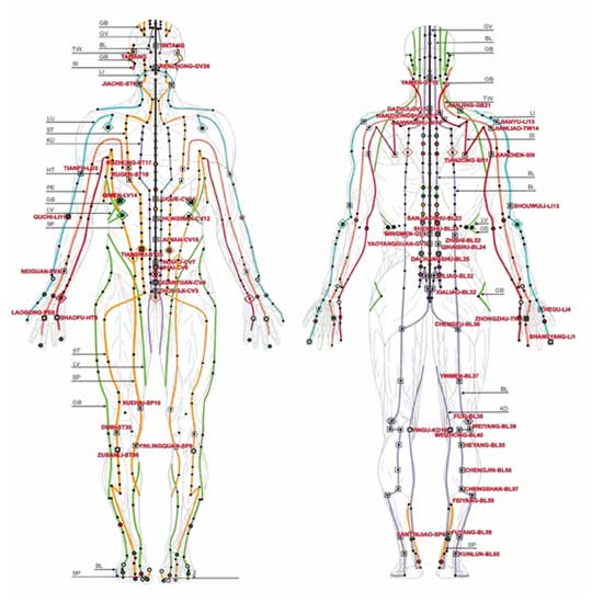Human Body Meridians showing acupuncture acu-points along body meridians