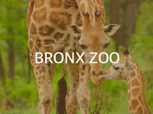 BronxZoo.png