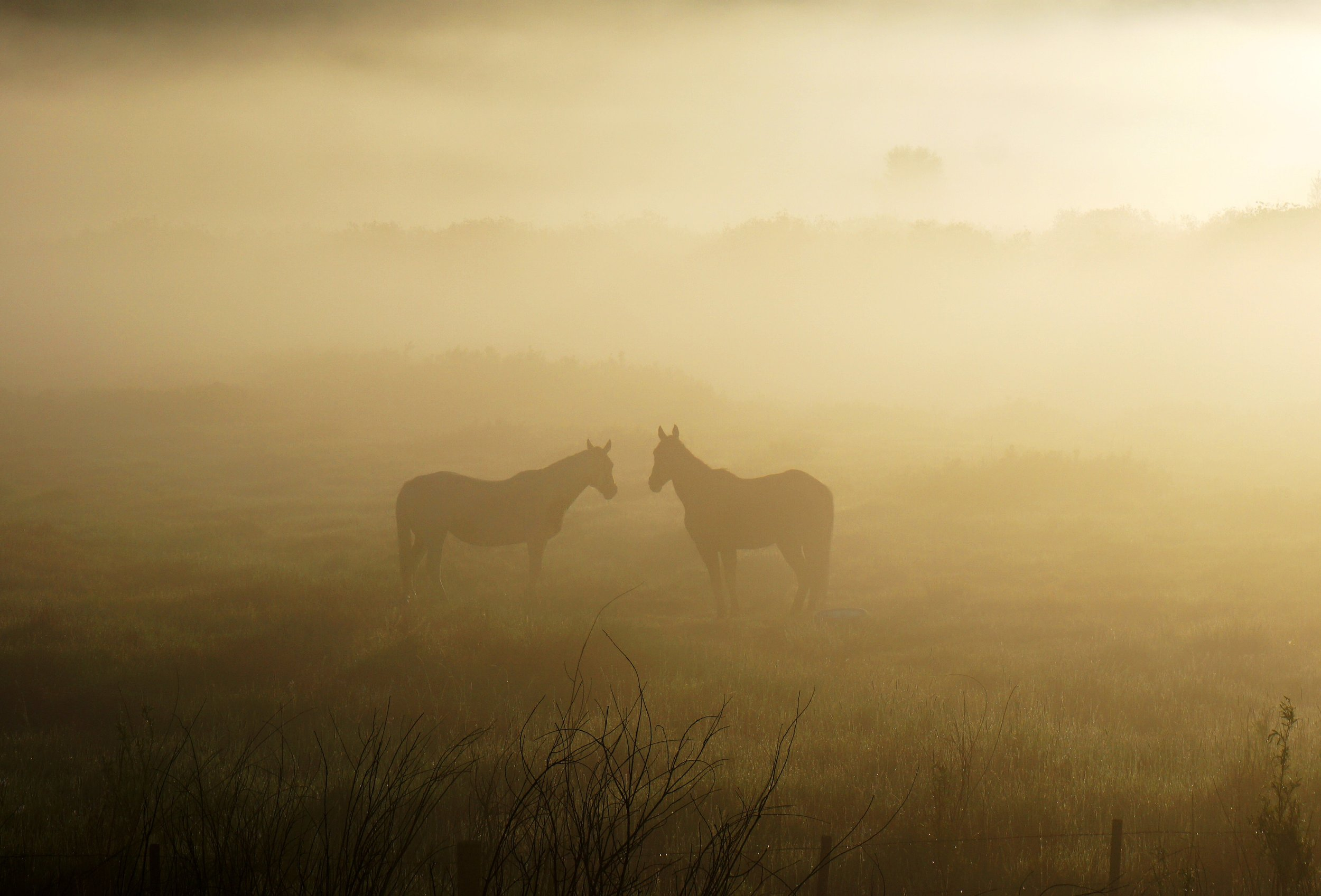 Horsecsunrise.jpg