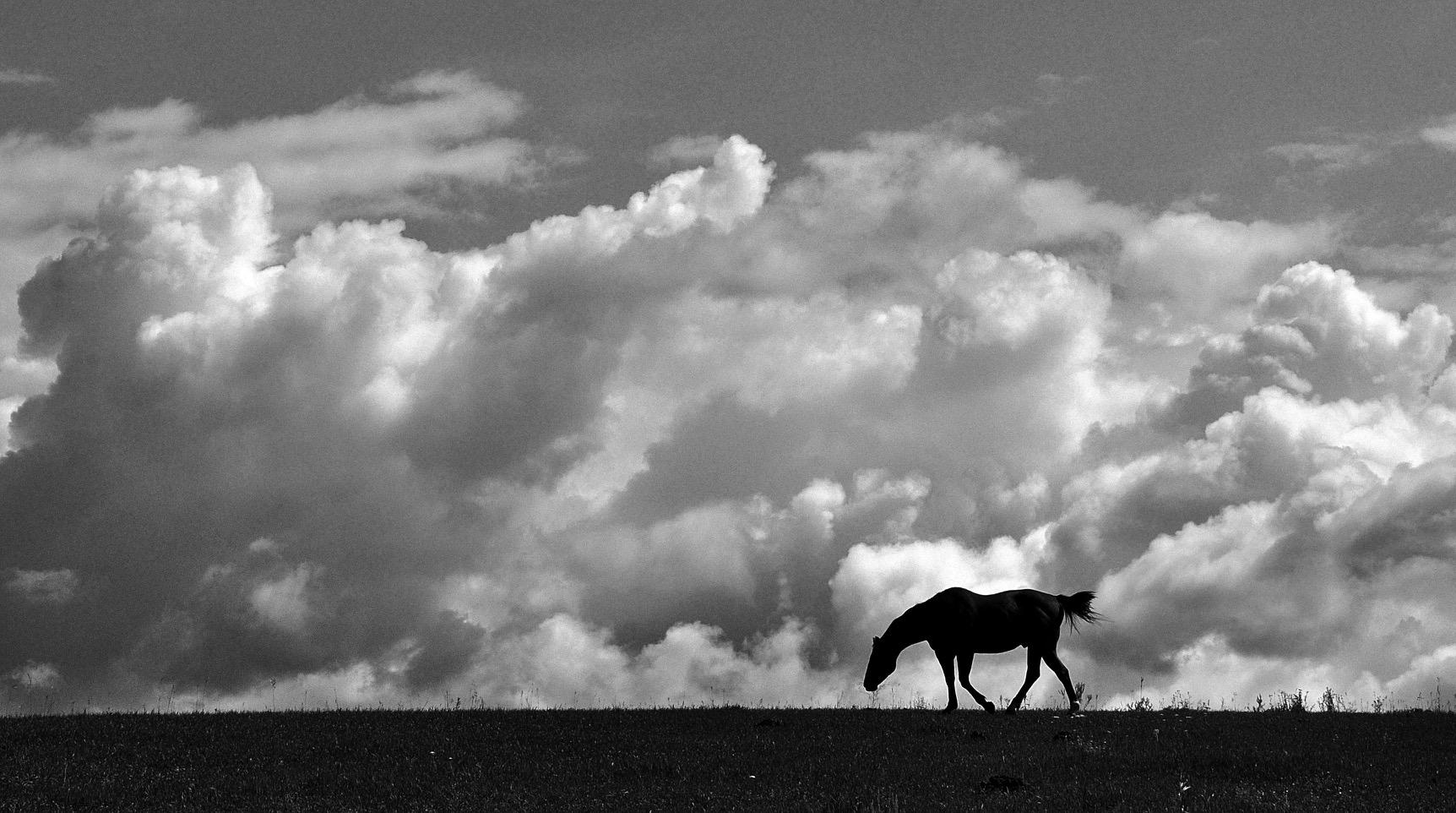 Scott Horse with Clouds.jpg