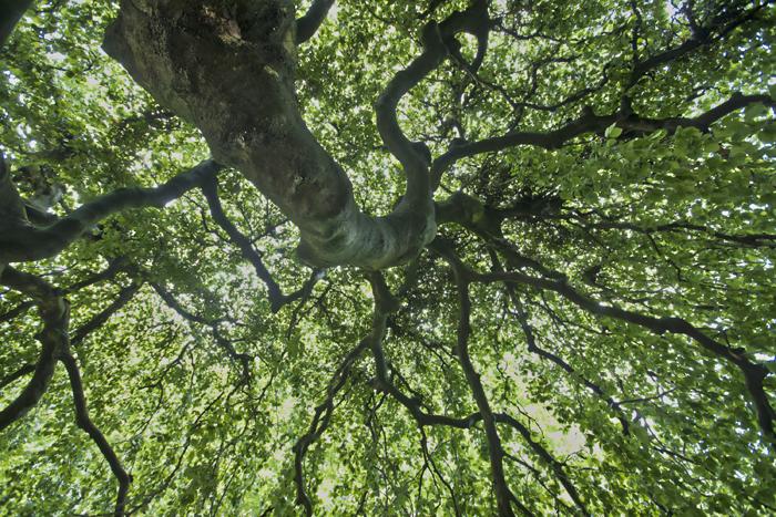 Tree, LondonPark.jpg