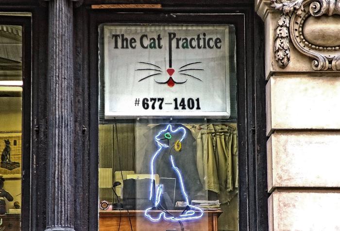 CatPractice3Final.jpg