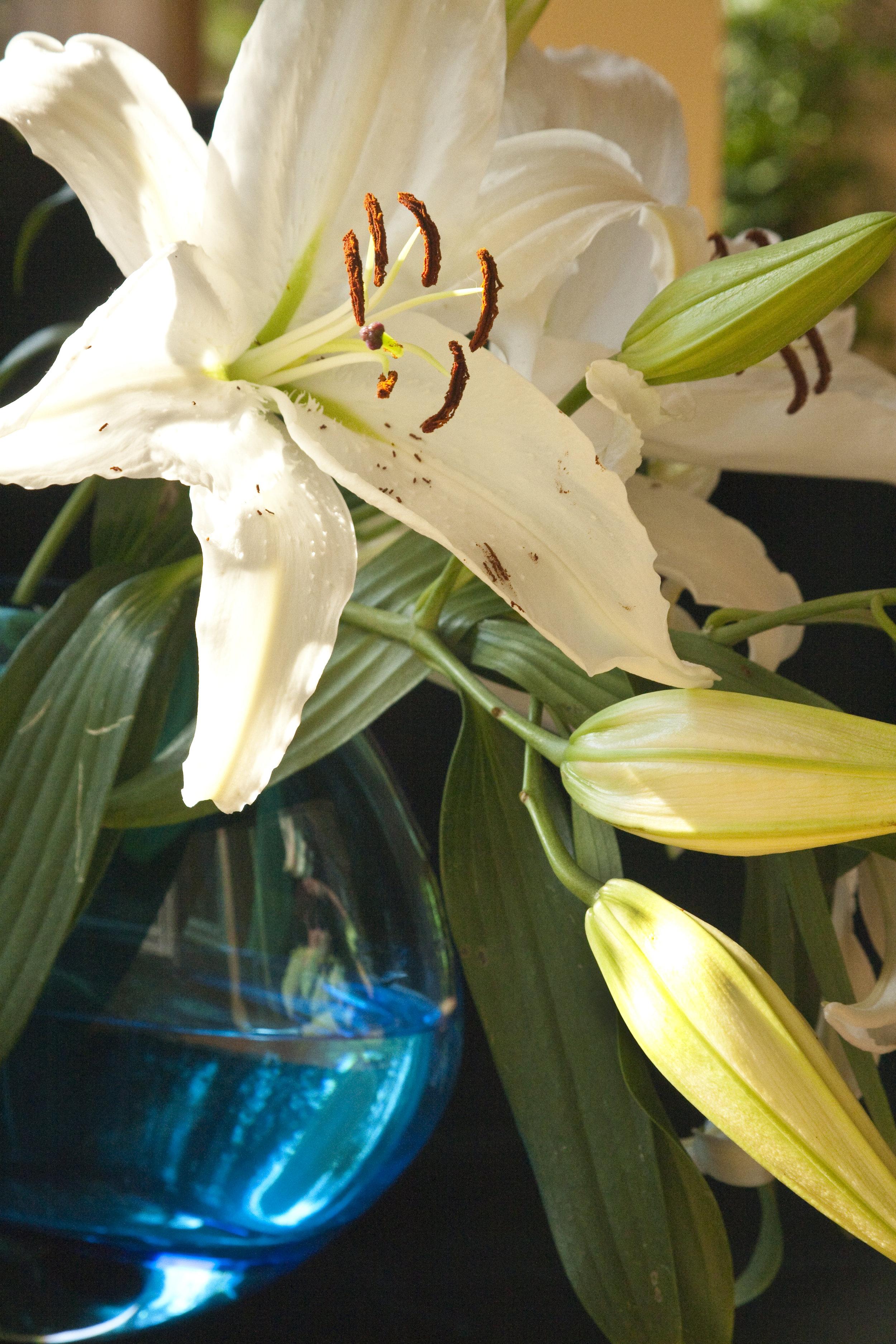 BlueDaylily18x12.jpg