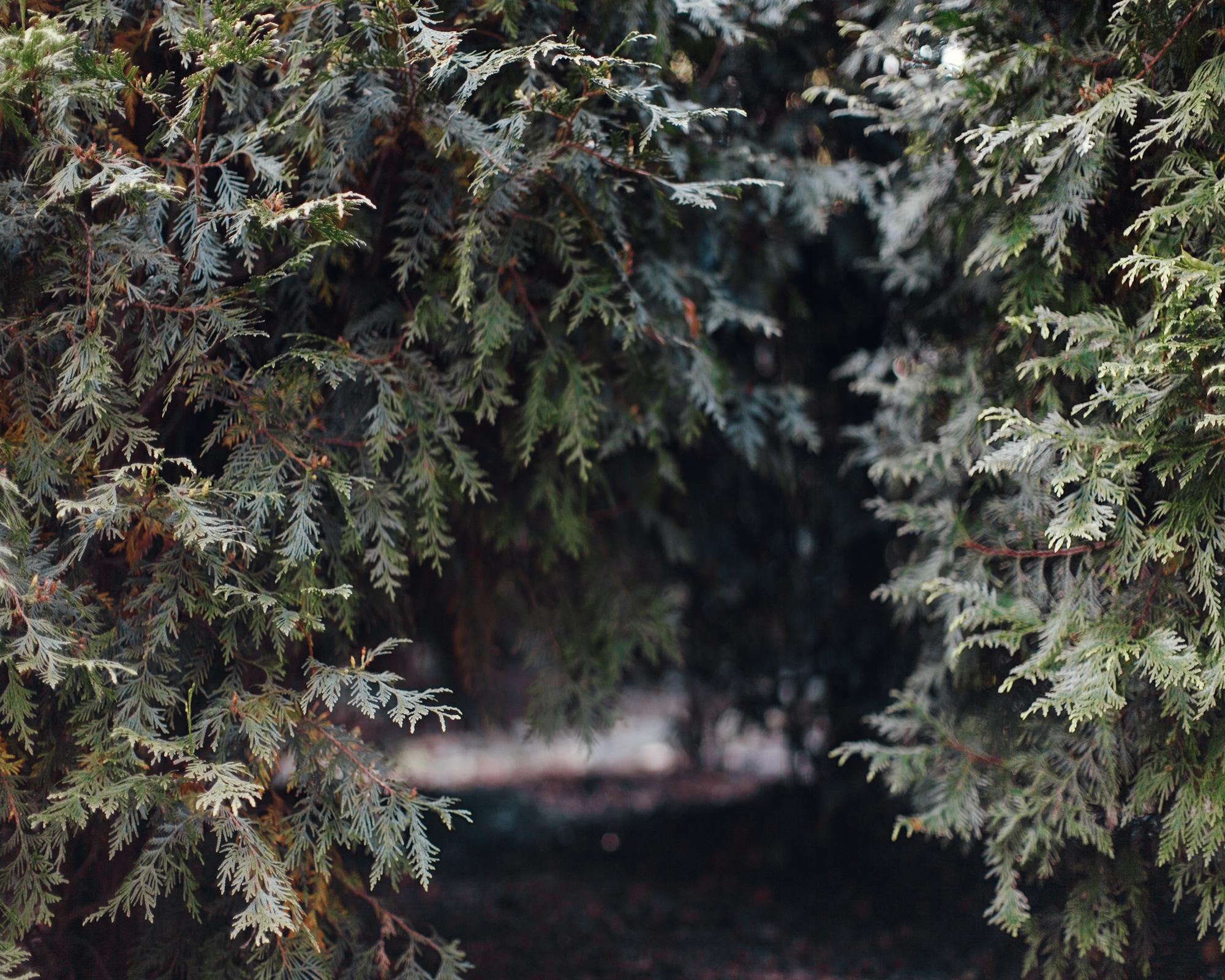 ForestOfLorien_HollinHills_CarolineSpace_Caroline-Space_005.jpg