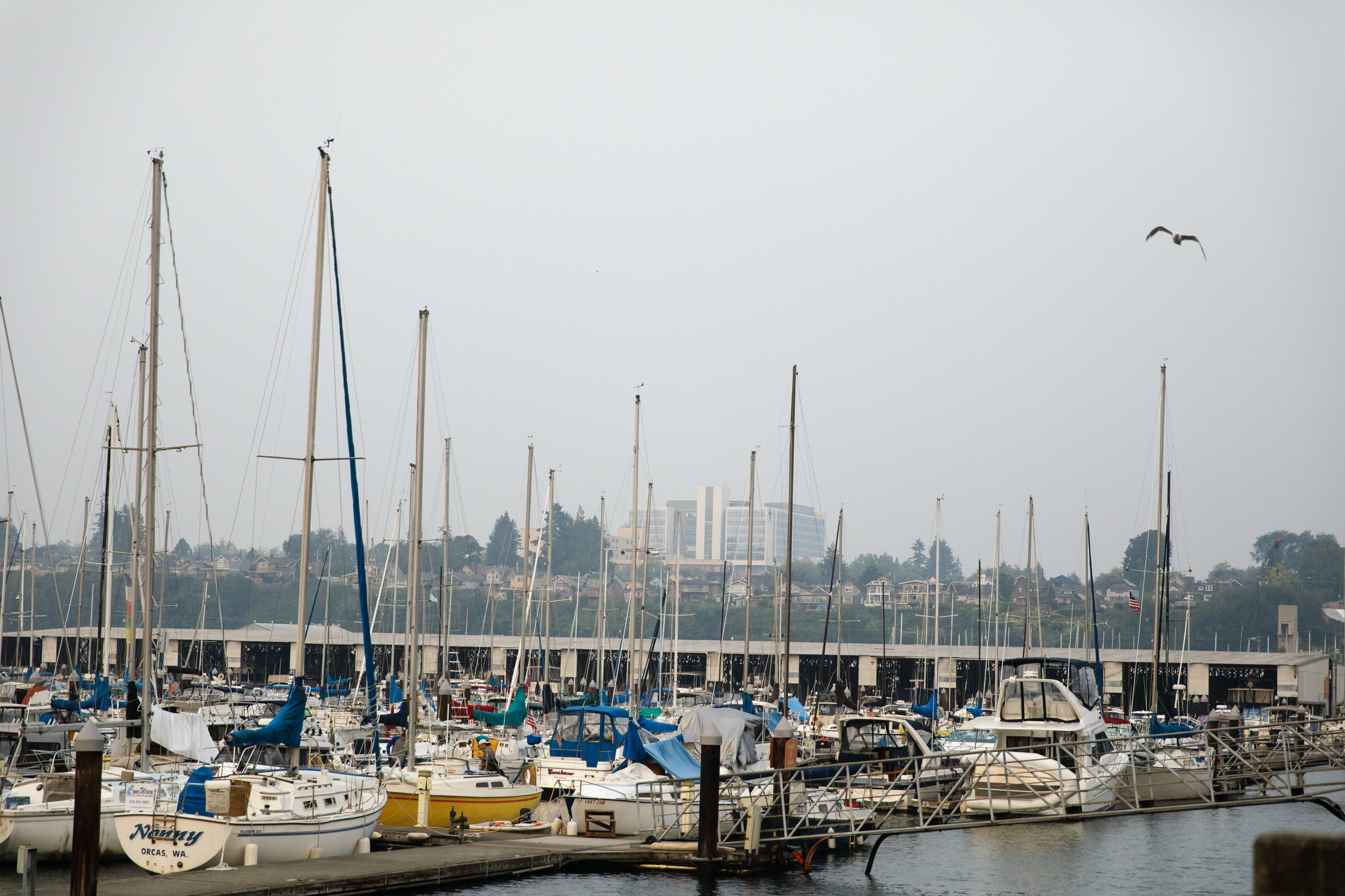Sailboats in Everett, Washington.    CREDIT: LEAH NASH FOR FINDING FIXES »