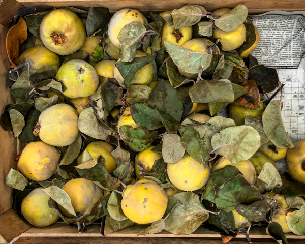 In addition to the more famous G.U.M. market, Yerevan also has a more low-key village market, which is where people from the Armenian countryside show up to sell amazing produce to city slickers. And because it was apple season, it was also quince season. These smelled delightful.