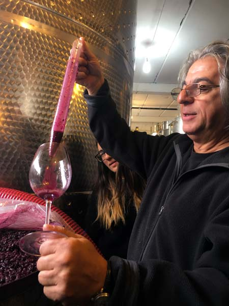 """We visited Vahe Keushguarian's wine incubator, where he had us sample a vat of what he called """"blue wine"""" -- I believe the grape was called Gaboudgeni? It looked like a blueberry smoothie. Who knows if this grape will be noble enough for anyone to take interest down the road, but these experiments are normal in in this wine frontier land. Vahes daughter, Aimee, also makes wine -- here she's sticking her head in to see what her dad's up to."""