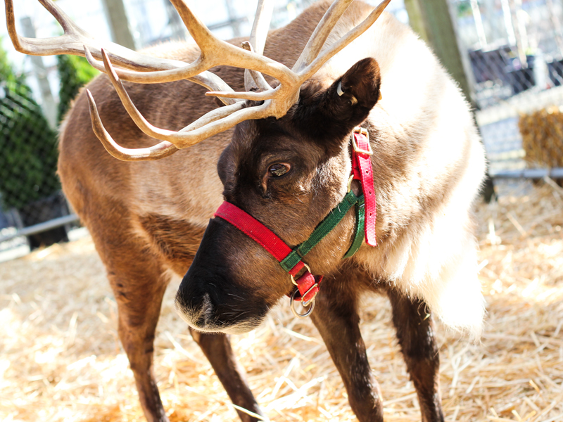 THE REINDEER ARE HERE! - Did you know the reindeer have landed at Watson's? Donder and Blitzen are here for their annual stay and can be viewed during regular business hours free of charge.November 10th through December 24th.