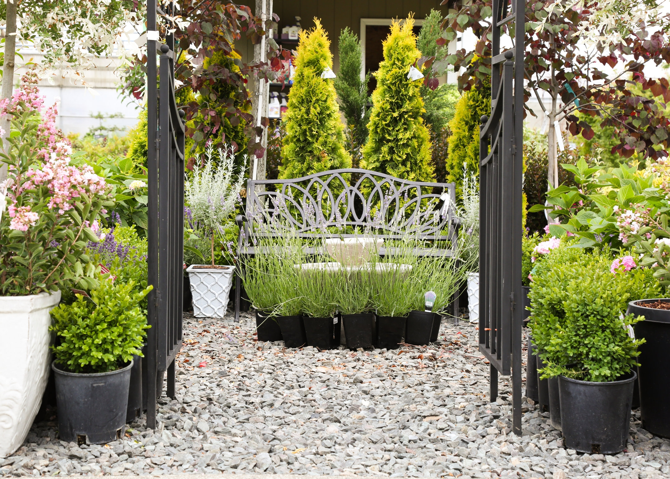 Trees and Shrubs - We carry a wide variety of trees and shrubs including hydrangeas, Japanese maples, fruit trees, vines and more.