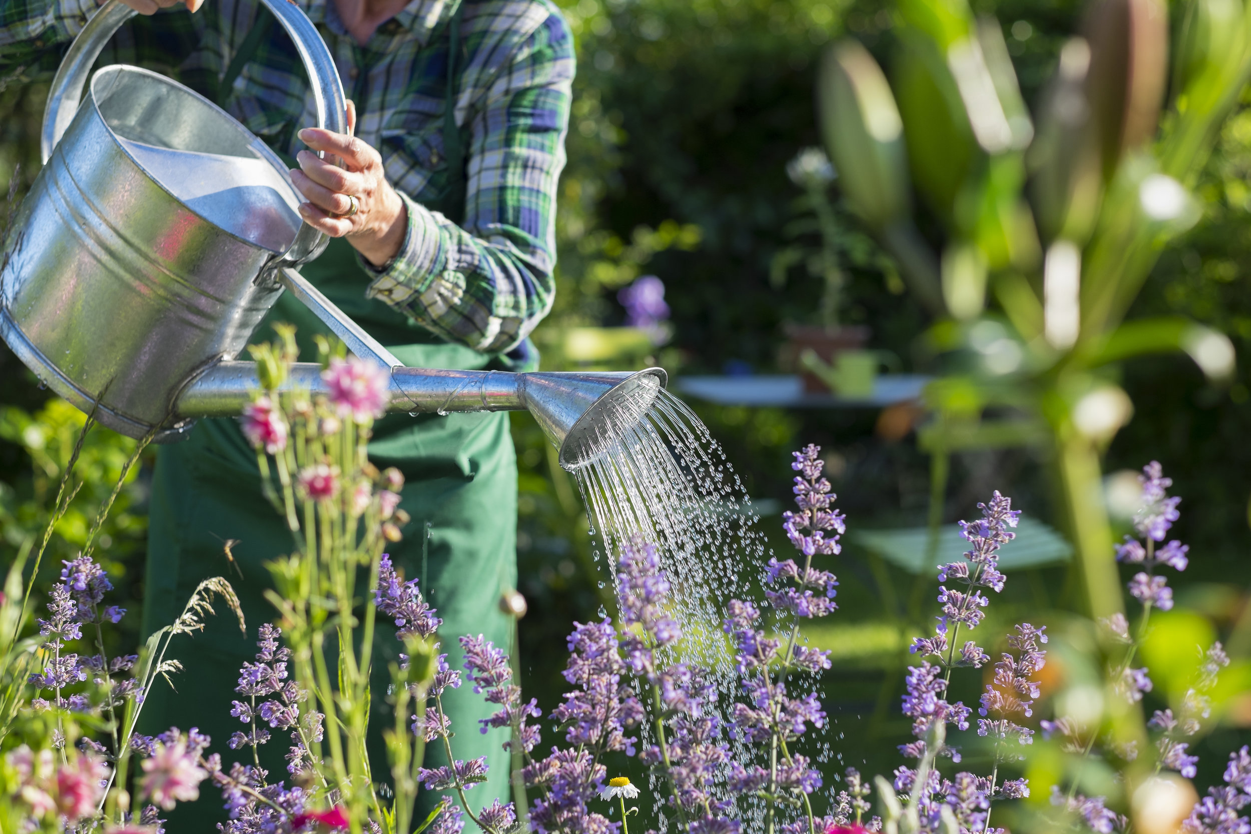 watering season has arrived -