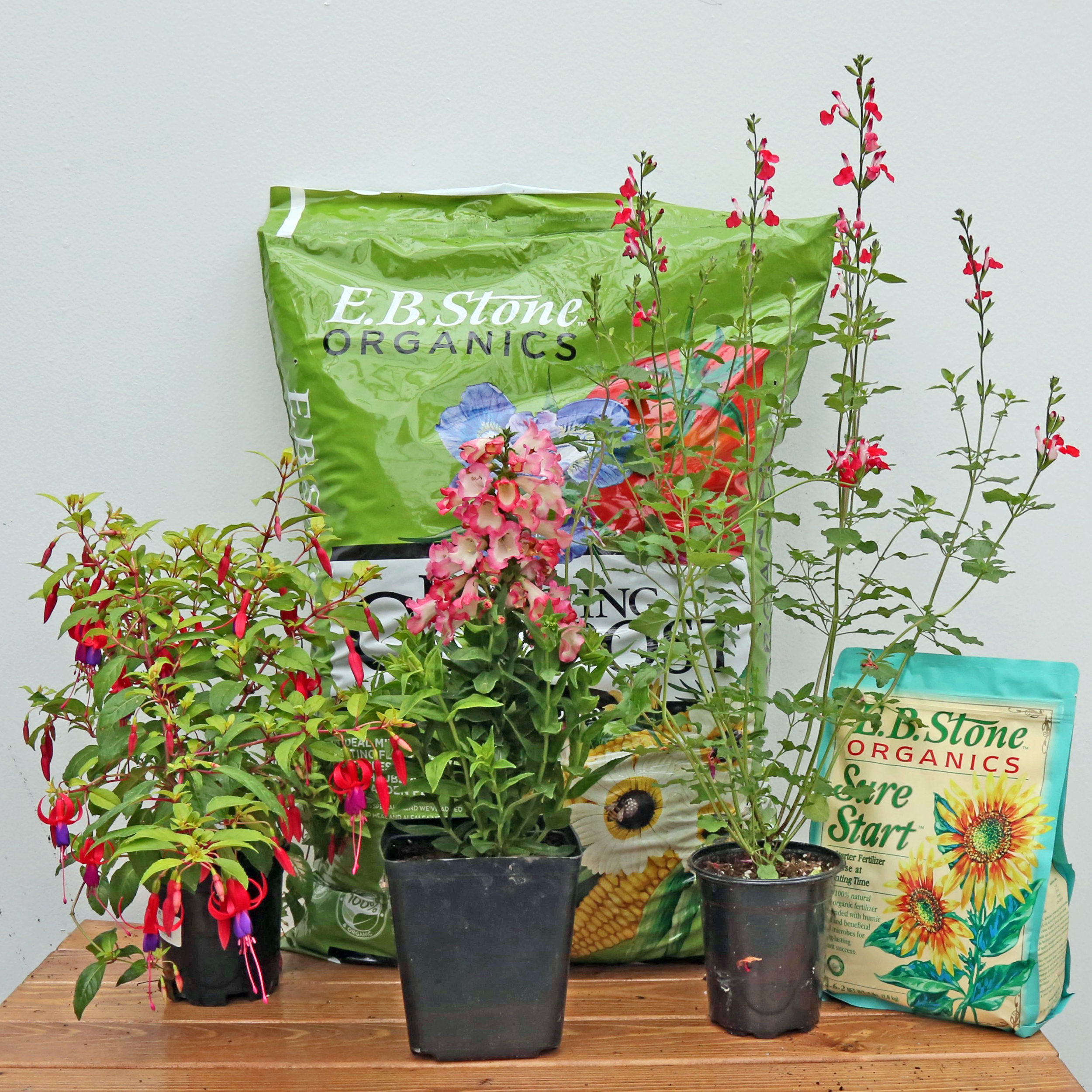 PlantS hummingbirds love AVAILABLE online! - Available for local delivery.