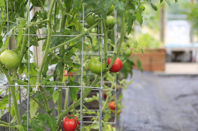Pick up stakes and cages for all your taller plants and vegetables.