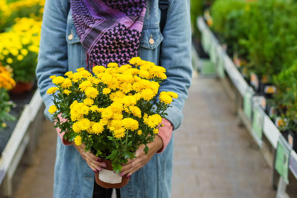IT'S TIME TO PLANT fall ANNUALS AND VEGGIES! -
