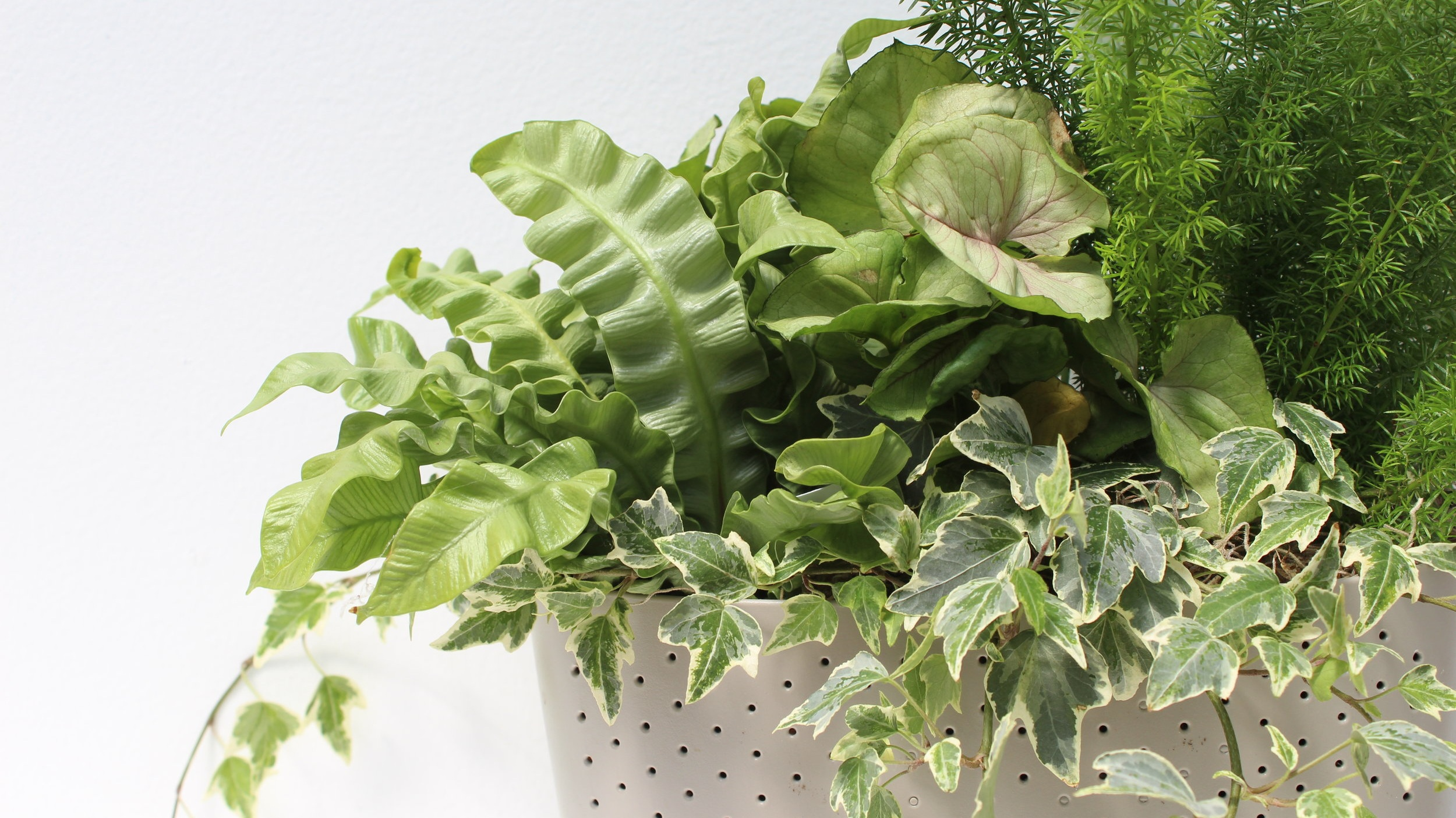 Build your own living wall - with WallyGro planters from Watson's