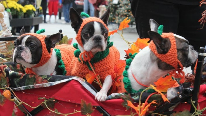 DOGGIE COSTUME CONTEST - Saturday, October 12th   11amDon't forget to dress up your furry loved ones for our annual Doggie Costume Contest. Pre-registration is required.