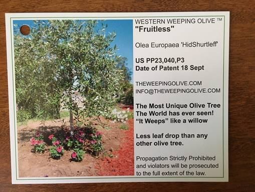 Olive label 2.jpg
