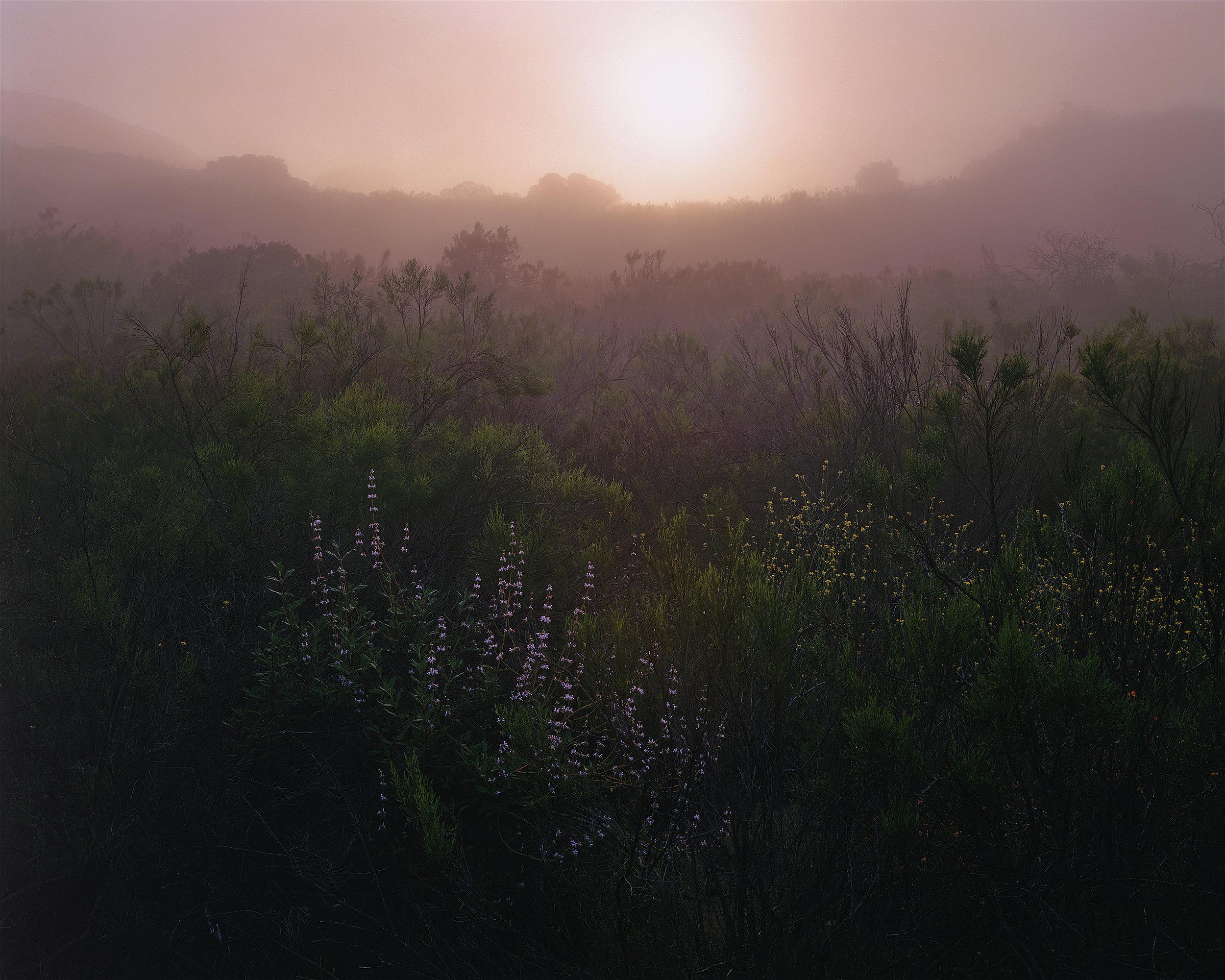 Sunrise through Fog