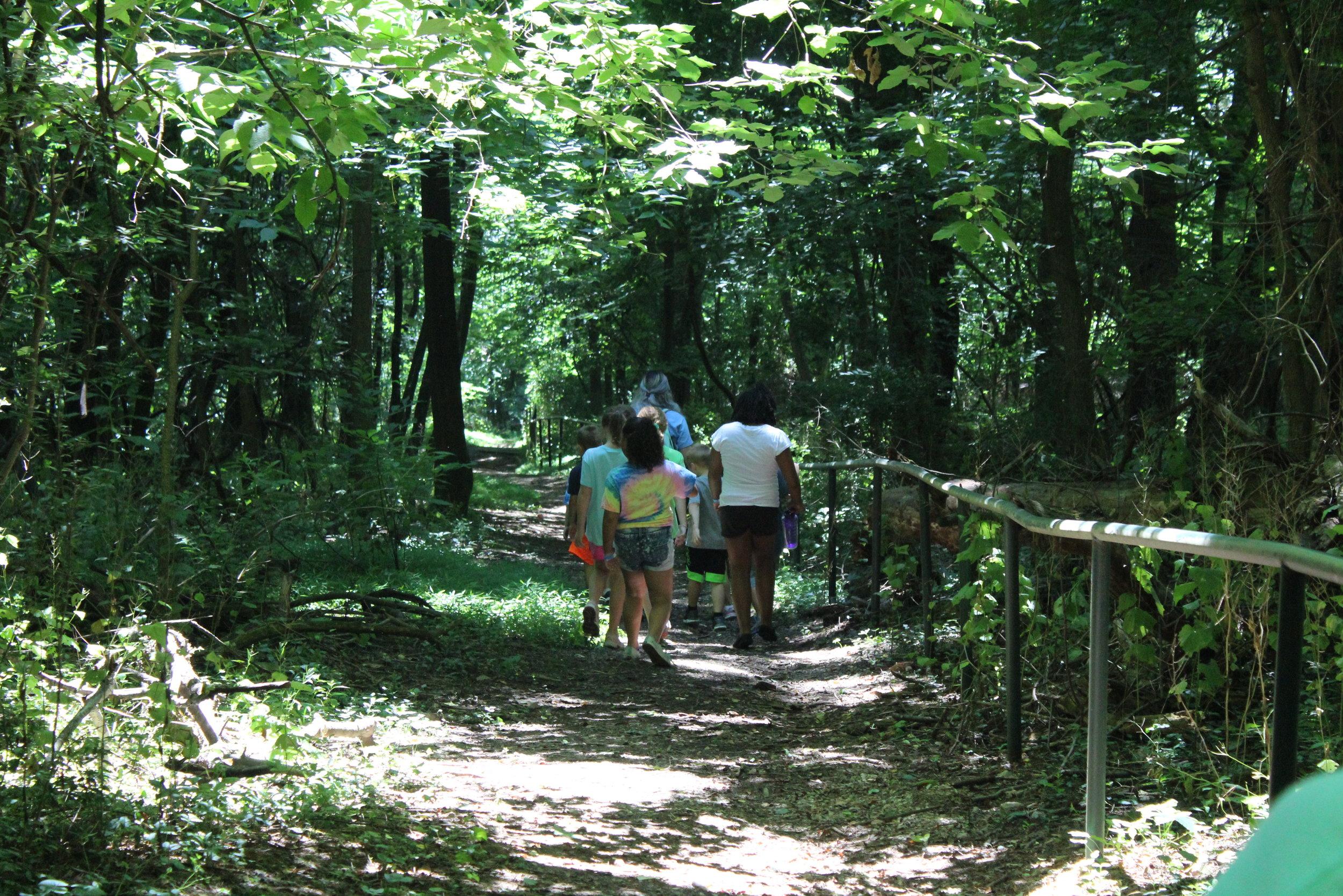Nature Walks -