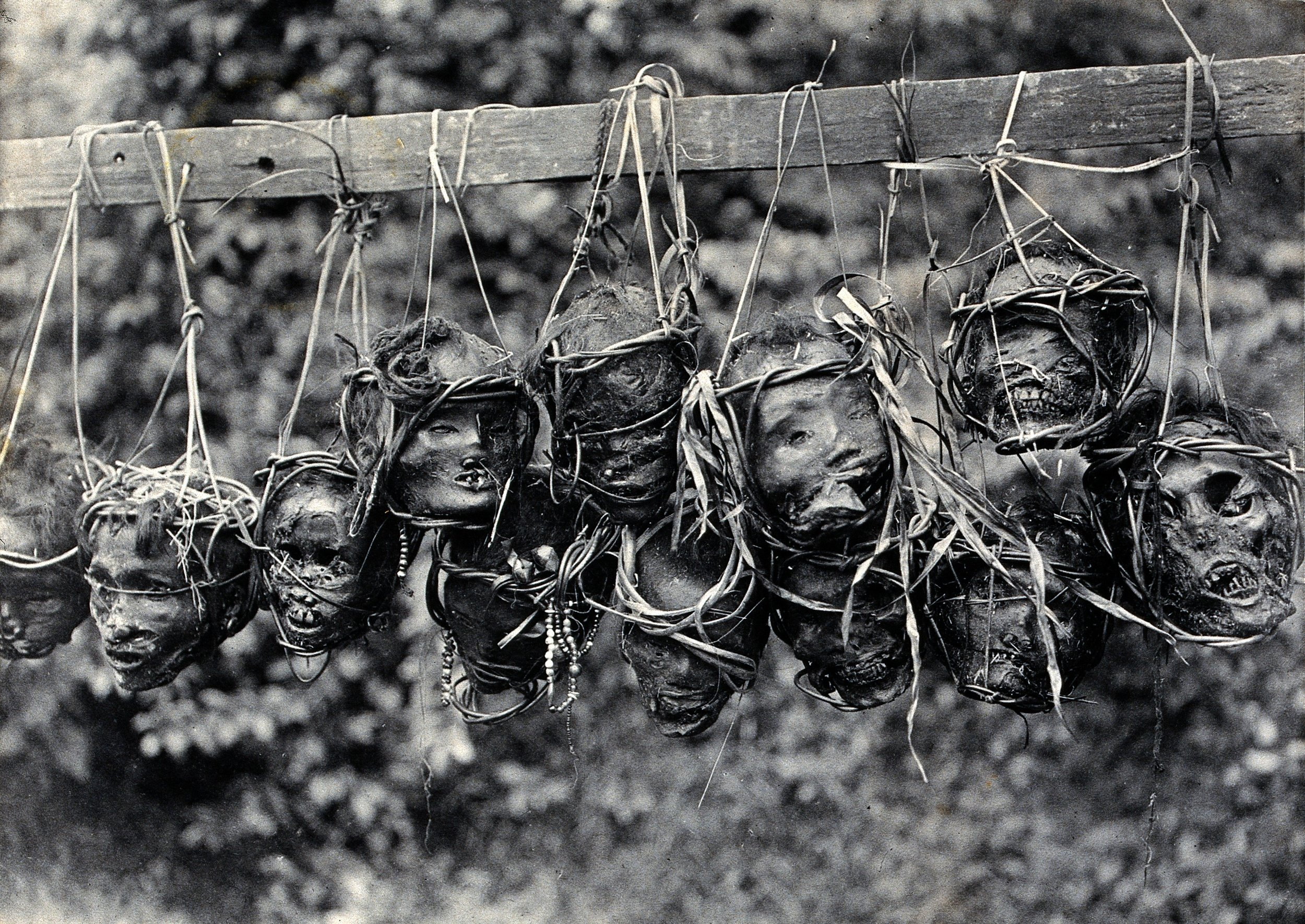 Preserved and Strung Taken Heads | Sarawak © Wellcome Collection | United Kingdom