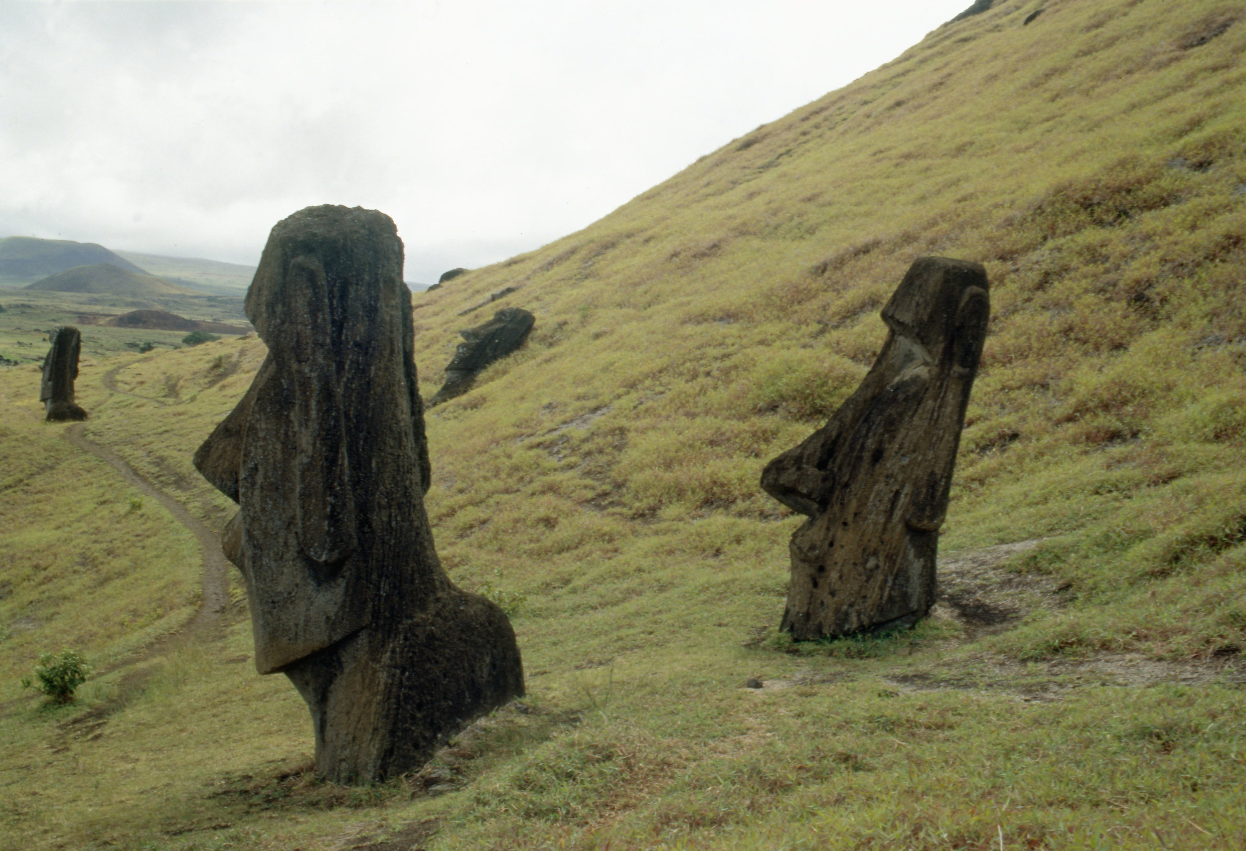 Moai statues, buried up to their necks by soil creep, on the slopes of the volcanic quarry Rano Raraku. Country of Origin: Easter Island. Place of Origin: Easter Island. Credit Line: N.J Saunders / Werner Forman Archive.
