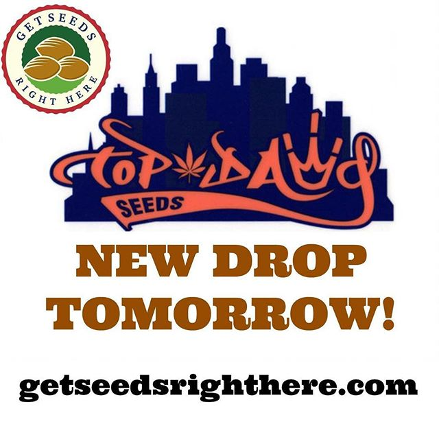 New @topdawgseeds available on the website on Wednesday. . getseedsrighthere.com . Sour Chem #1. Sour Banana. Double Sour. Fam 95. Garlic Goat. I de la D. Sour Diesel IX. Sour Ghost. And more! . #getseedsrighthere  #topdawgseeds