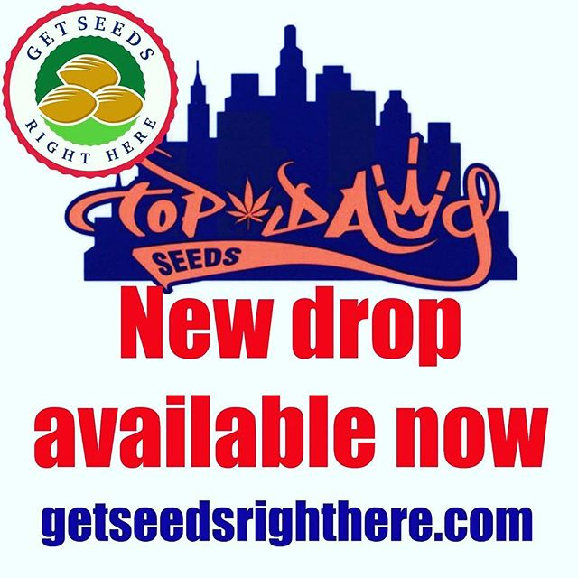 New @topdawgseeds available on the website NOW! . getseedsrighthere.com . Sour Chem #1. Sour Banana. Double Sour. Fam 95. Garlic Goat. I de la D. Sour Diesel IX. Sour Ghost. And more! . #getseedsrighthere  #topdawgseeds