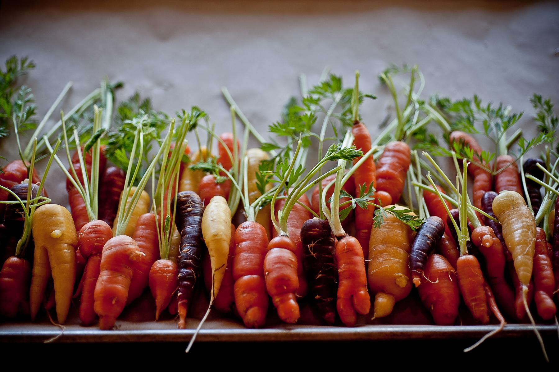 carrot filler.jpg