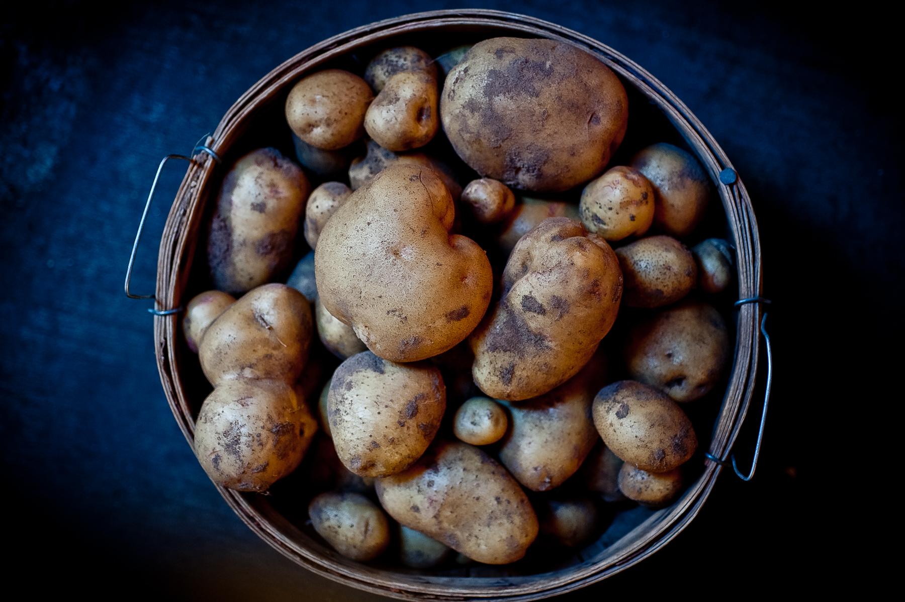 potatoes farm.jpg