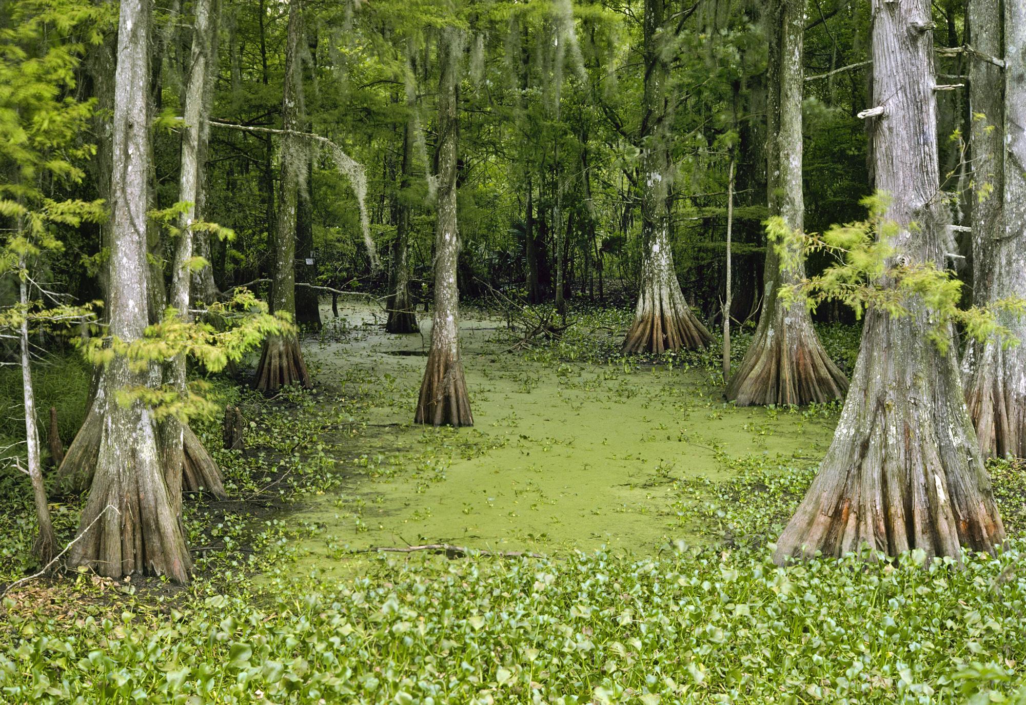 Louisiana Bayou 1976