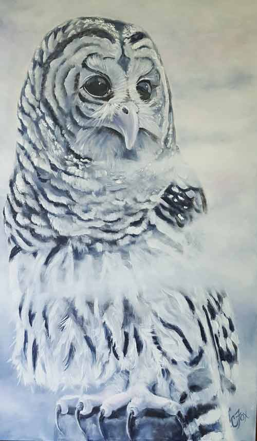 Barred Owl in the Mist