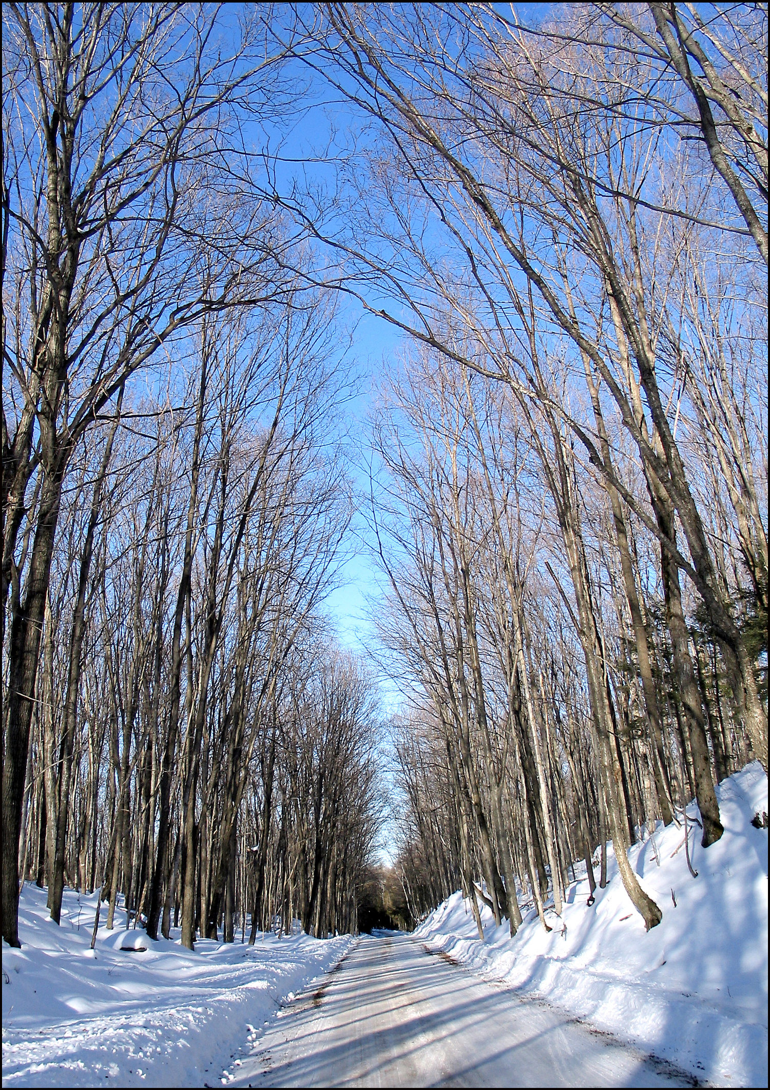 The Old Hastings Road - Winter