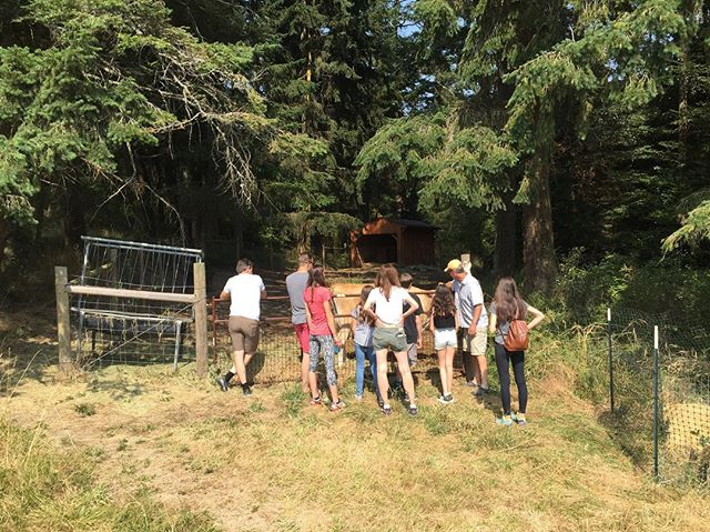 Hanging out with old Eve the jersey cow and a couple excited families from Seattle and Austria at @orcasmoon on a hot summer day!