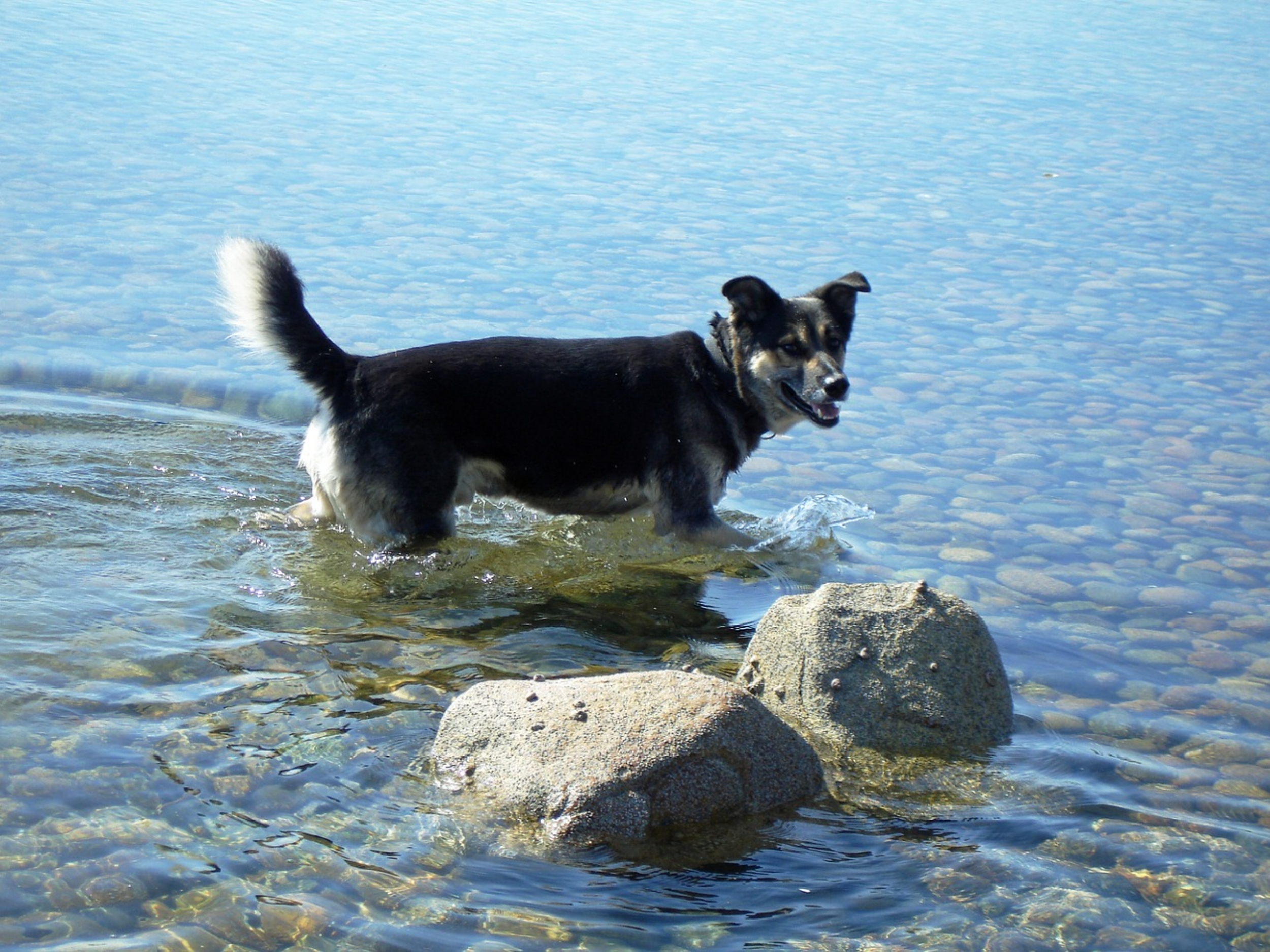 dog-in-water