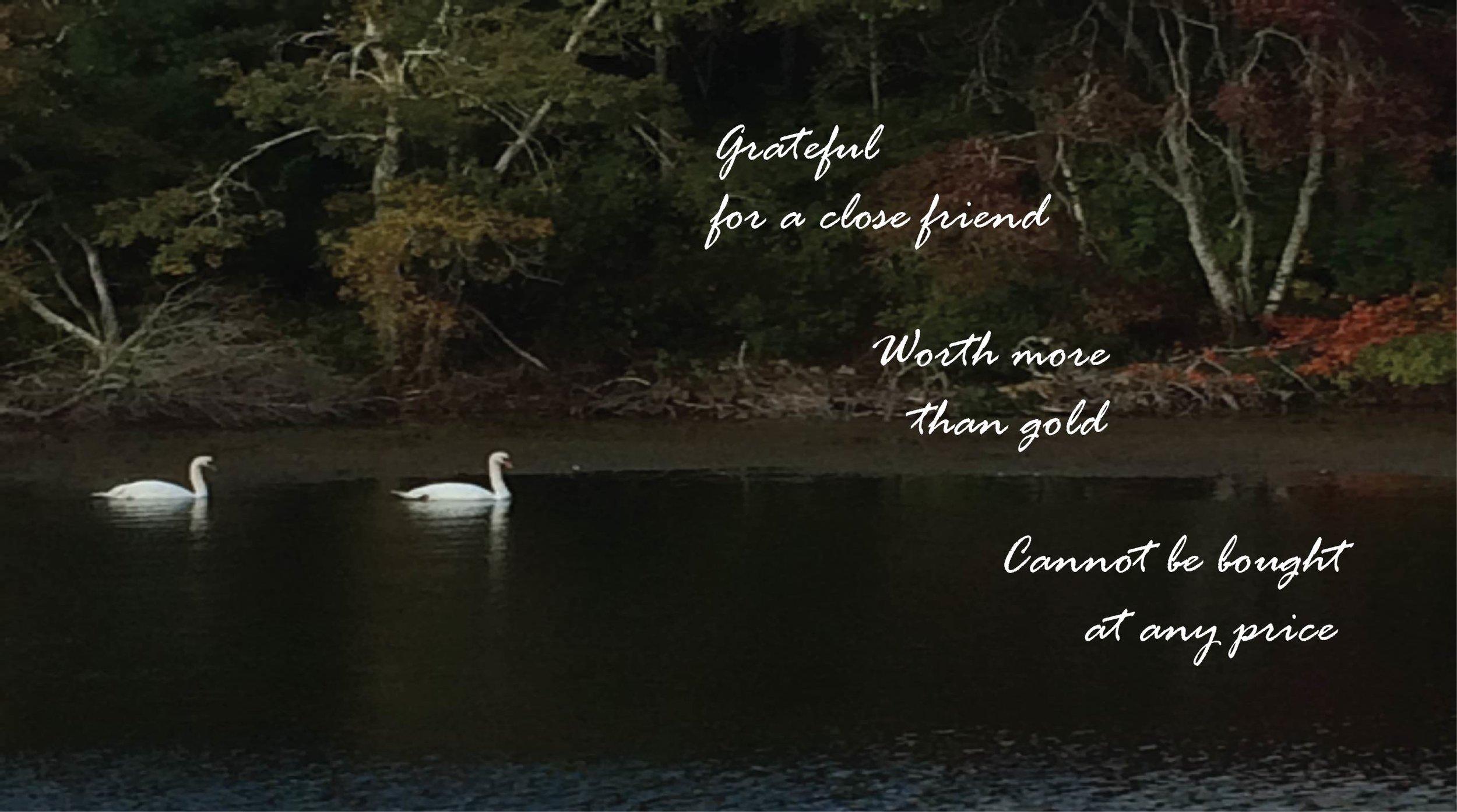 Grateful swans.jpg