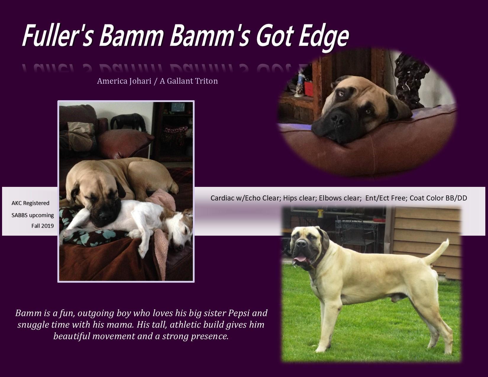 Bamm poster.jpg