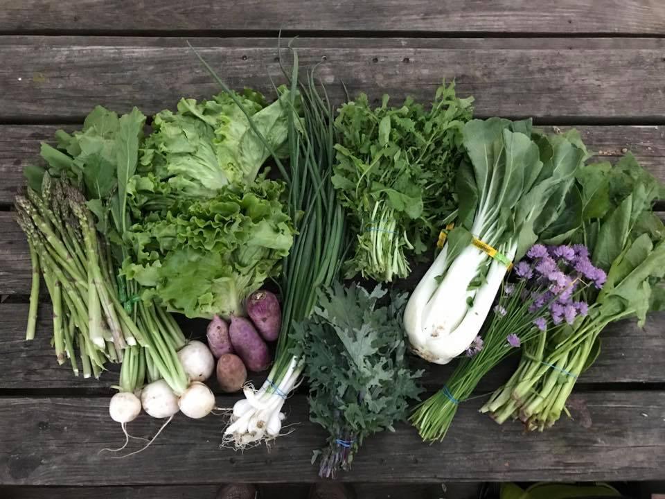 Some fresh veggies from Tantre Farm!