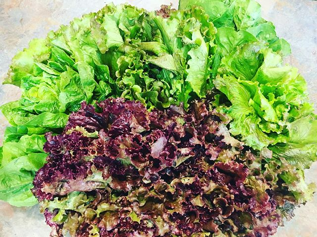Thank you @tantrefarm for the beautiful lettuce!! Choose one of our chef inspired bowls, or craft your own with lettuce to taste the freshest lettuce in town! #freshforage #annarbor #farmtotable #hyperlocal #fresh #healthy #delicious #freshisbest #supportlocalfarms #supportsmallbusiness #eatlocalfoods
