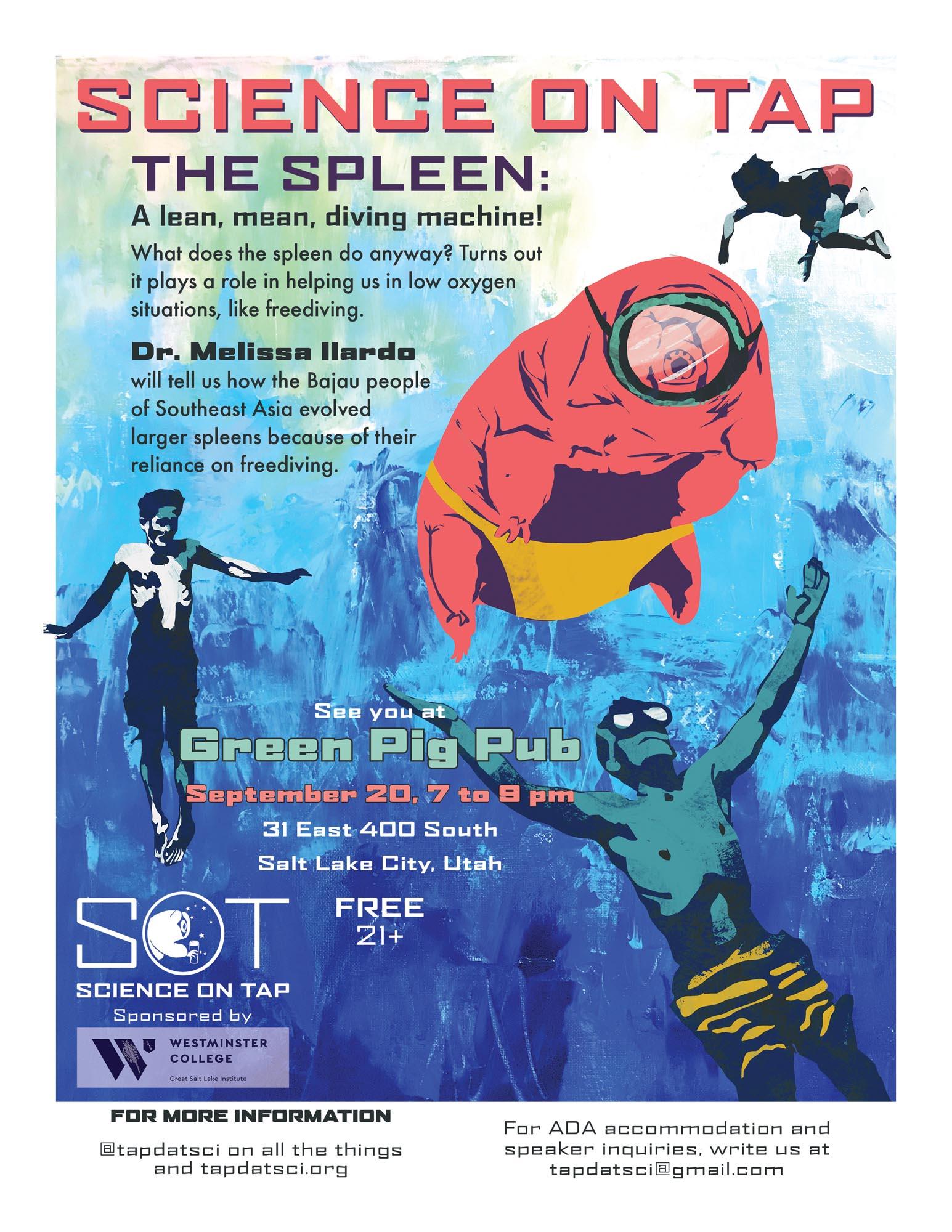 The Spleen: A Lean, Mean, Diving Machine   Melissa Illardo, PhD  September 20, 2018