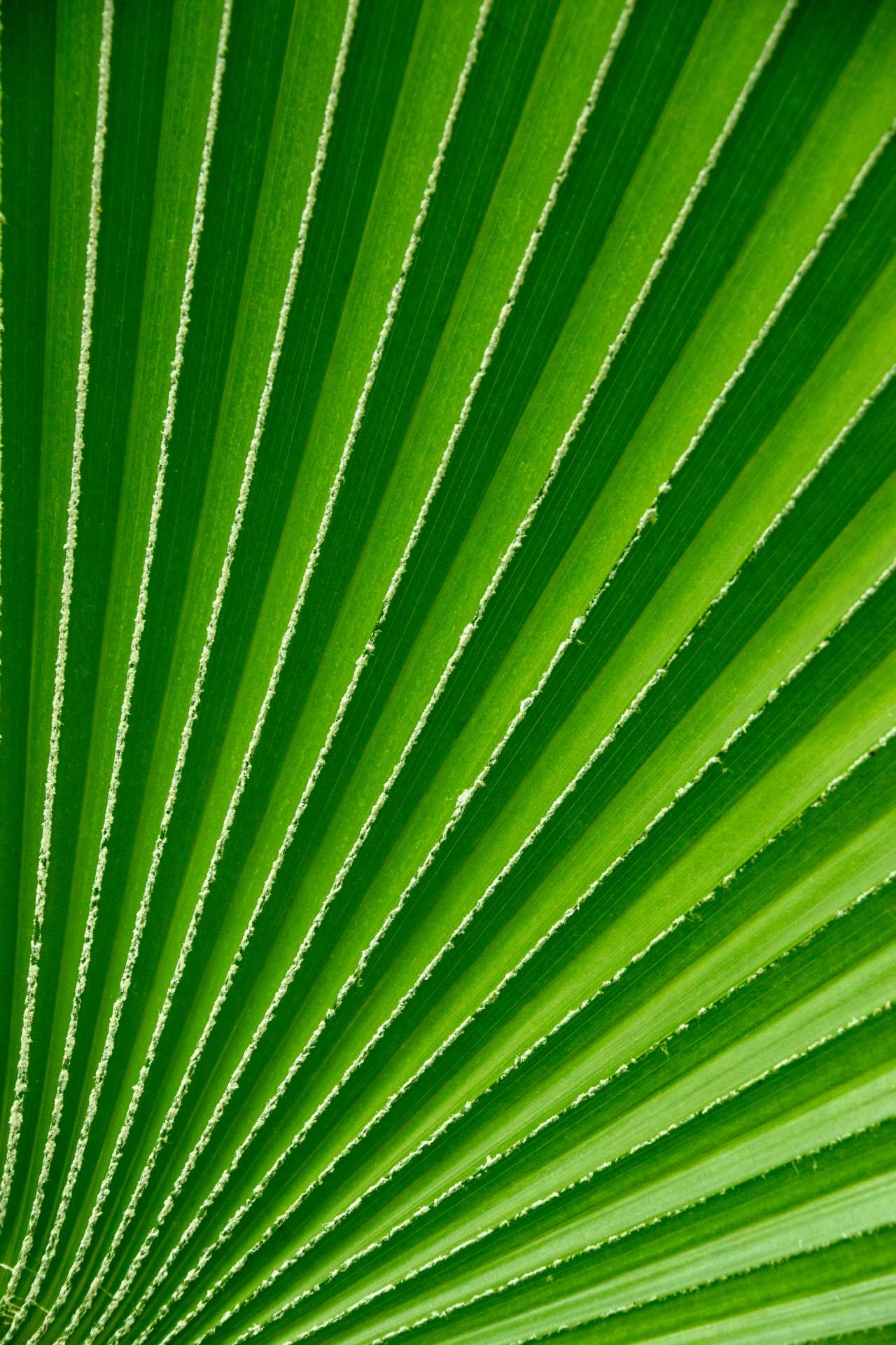 green-palm-tree-leaf-1523972823mku.jpg